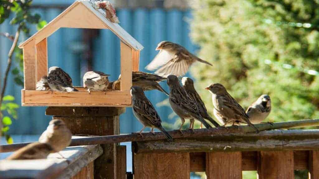 Best Bird Feeder 2020: Shopping Guide & Review