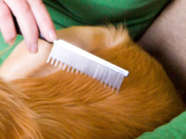 Best Dog Comb 2020: Shopping Guide & Review