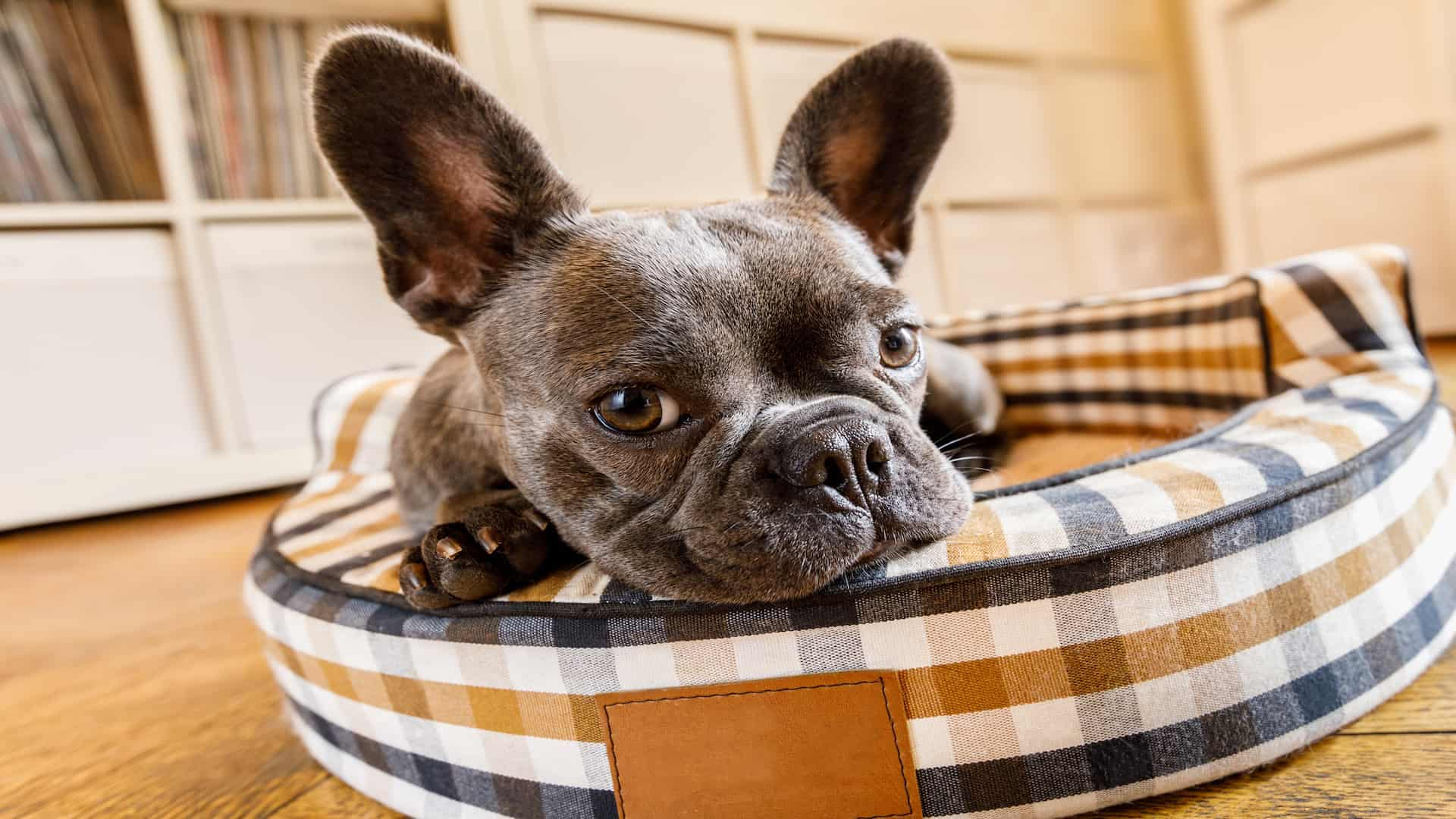 Best Dog Bed 2020: Shopping Guide & Review