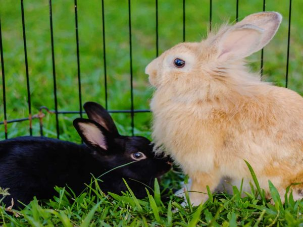 Best Rabbit Cage 2020: Shopping Guide and Review
