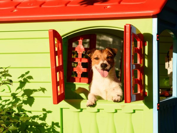 Best Large Dog Kennel 2020: Shopping Guide & Review
