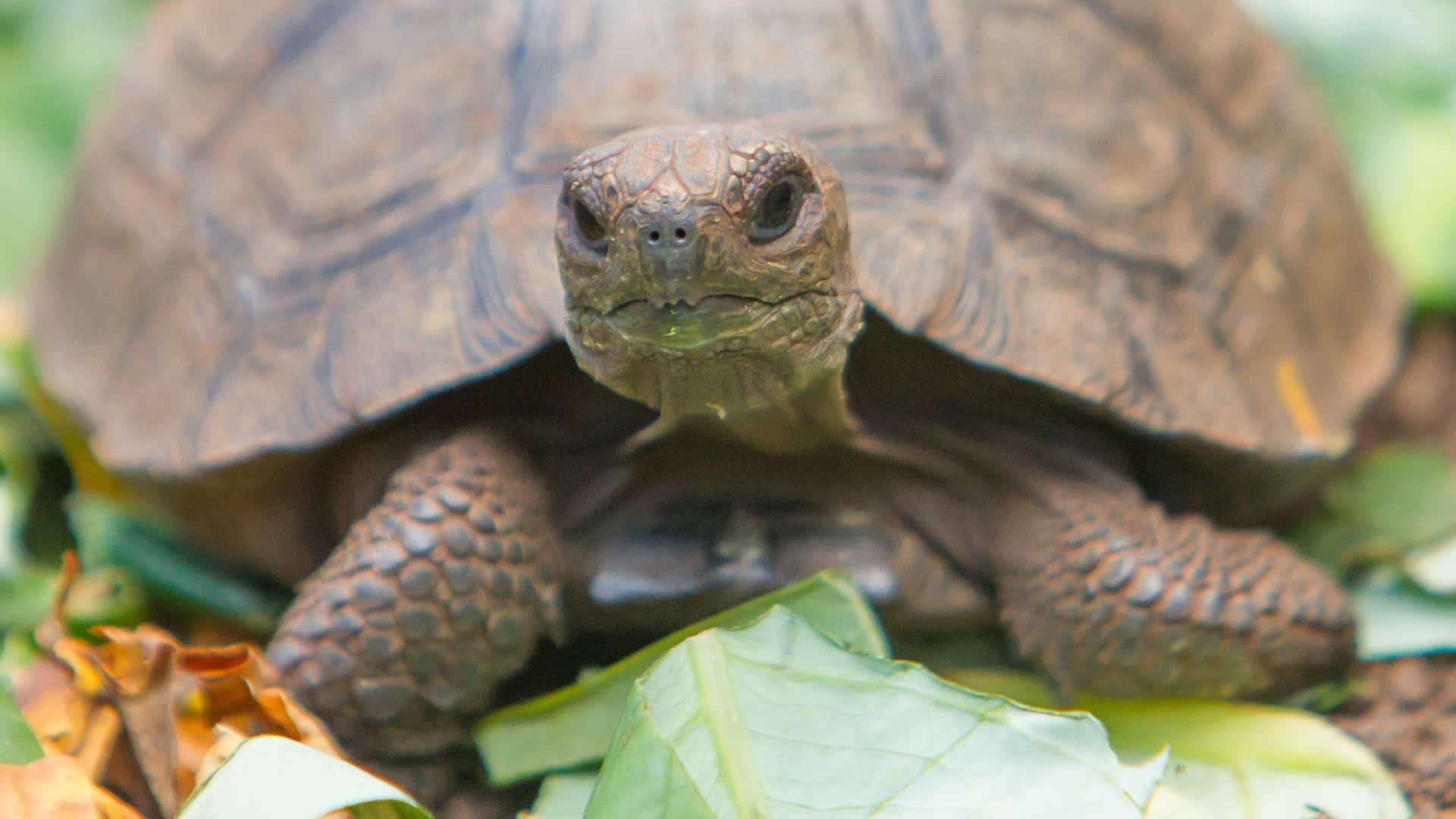 Best Turtle Food 2020: Shopping Guide & Review