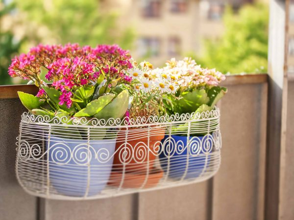 An image of a balcony flower box filled with plantpots