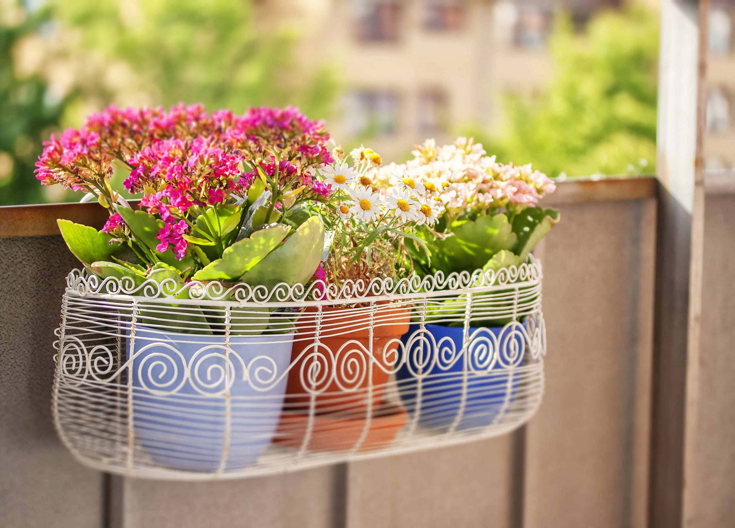 Best Planter 2020: Shopping Guide & Review