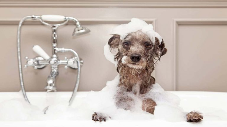 Best Dog Shampoo 2021: Shopping Guide & Review