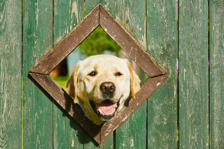 fence with a dog window