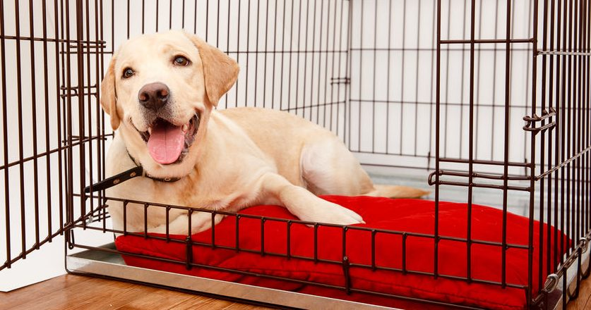 Best Dog Cage 2020: Shopping Guide & Review
